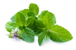 Liquid Booster DIY Spearmint
